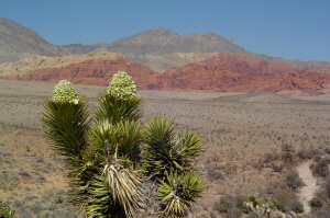 Red Rock Canyon 4 300.jpg